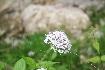 Flora in Piatra Craiului