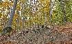 Autumn in Piatra Craiului 1