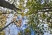 Looking up in Piatra Craiului