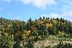 Peisaj de toamna in padurile de langa Piatra Craiului 2