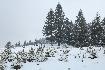 Winter Landscape in Piatra Craiului
