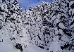 Snowy pine trees in Piatra Craiului