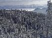 Snowy forest in Piatra Craiului