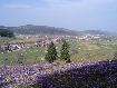 Orasul Zarnesti cu flori de primavara vazut de la Gura Raului