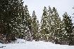 Iarna pe drumul Forestier