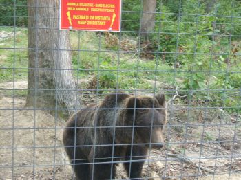 Libearty Bear Sanctuary Zarnesti Romania